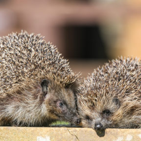 Whitby Wildlife Photography