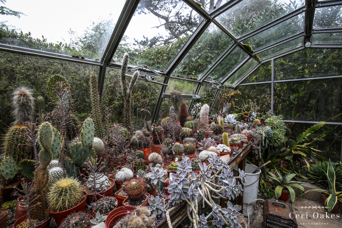 Photography Feature on Cacti Shop, Whitby